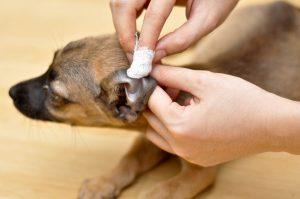curatat urechi