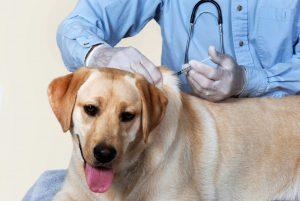 vaccinare caini