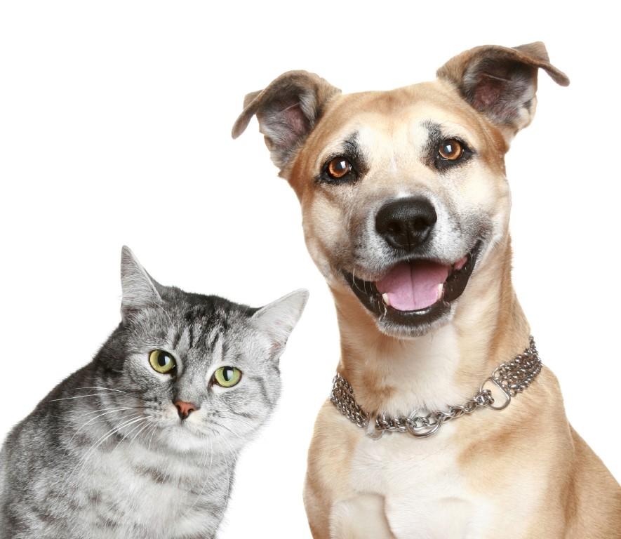 Sterilizare caini si pisici